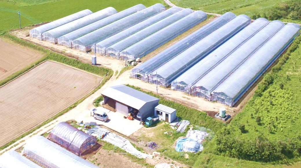 五島農園について